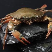 满黄螃蟹 1