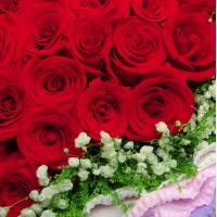 99朵红玫瑰